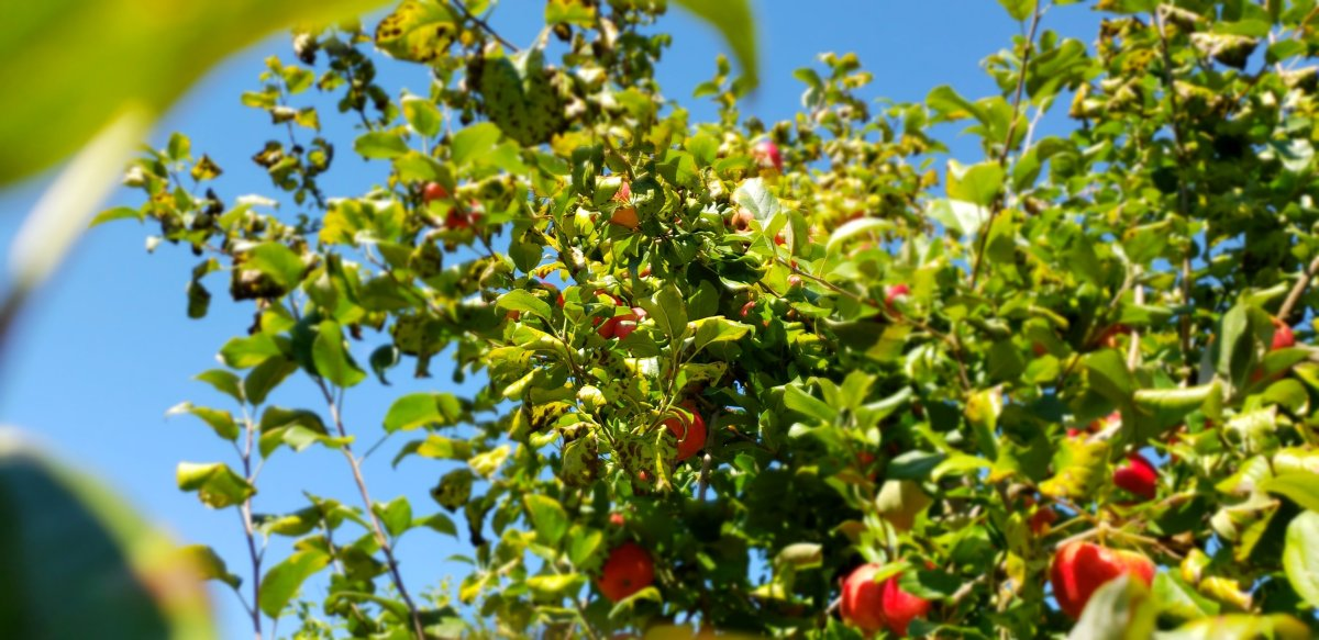 All Seasons Orchard | Apples & Pumpkins - Woodstock, IL