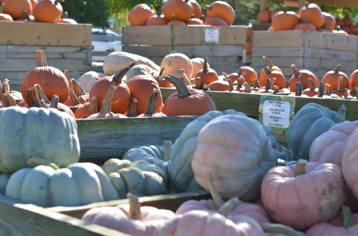Fall Family Activities |Chicago &Suburbs